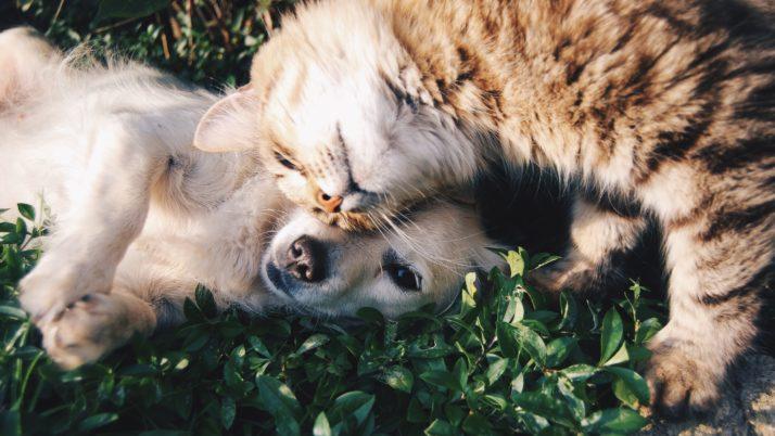 Psi in mačke ZERO WASTE oz. brez odpadkov