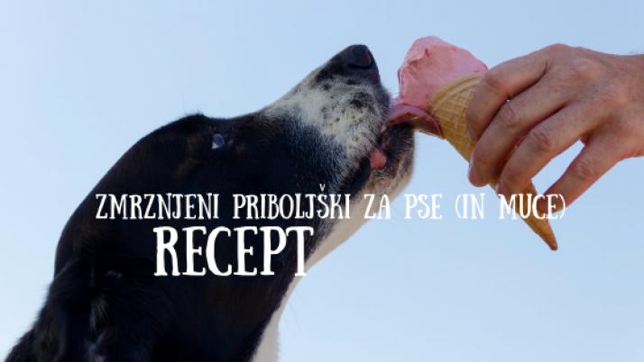 RECEPT: Enostavni zmrznjeni priboljški za pse (in muce)