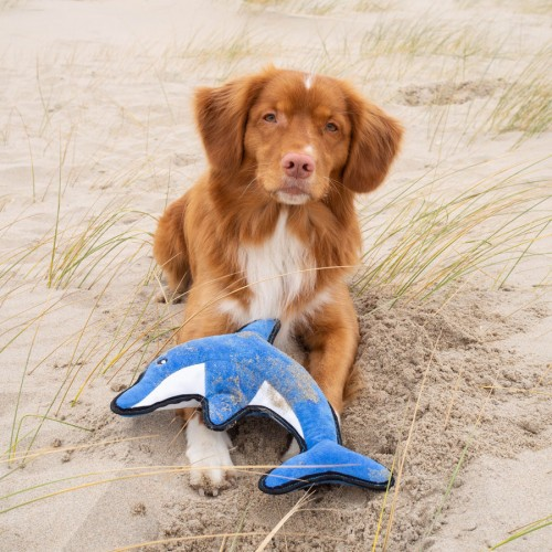 Delfin David eko plavajoča igračka