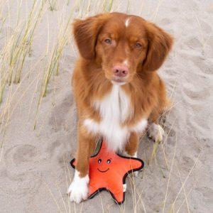 Morska zvezda Sindy plavajoča eko igračka