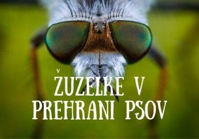 Žuželke v prehrani psov – tabu ali prihodnost?
