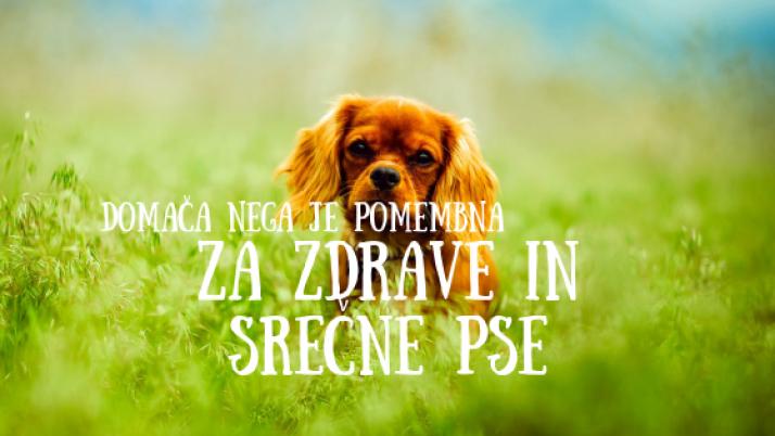 Domača nega je pomembna za zdrave in srečne pse