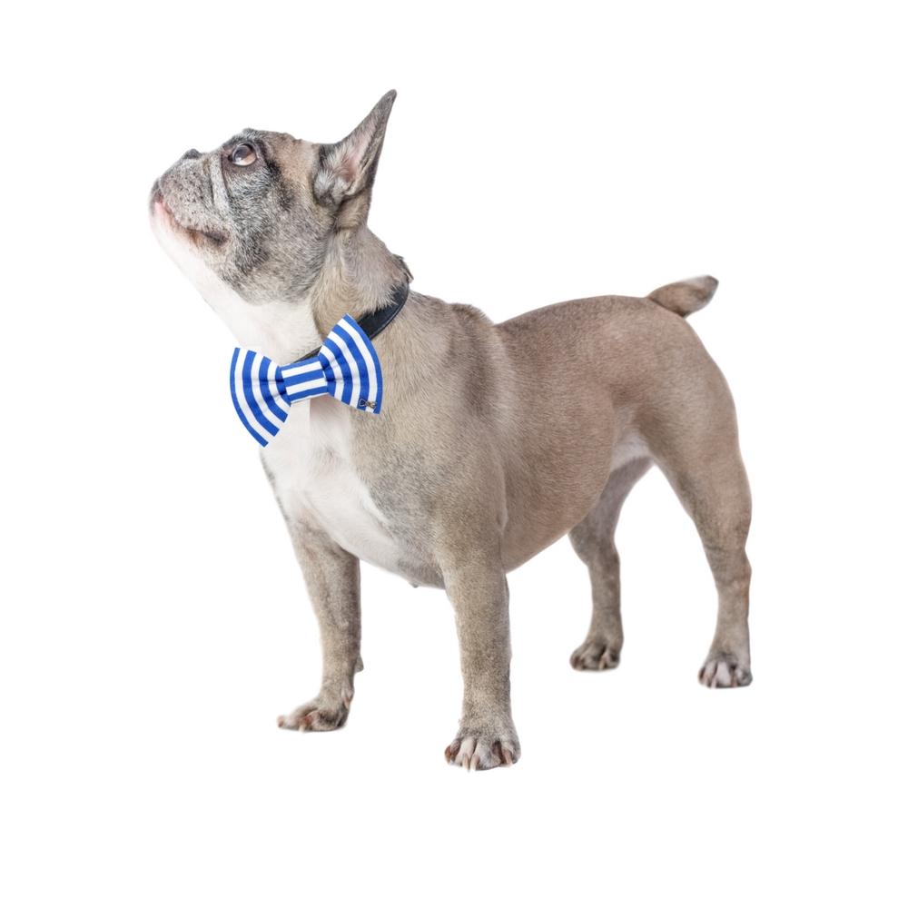 Metuljček z dobrodelno noto Funky Dog