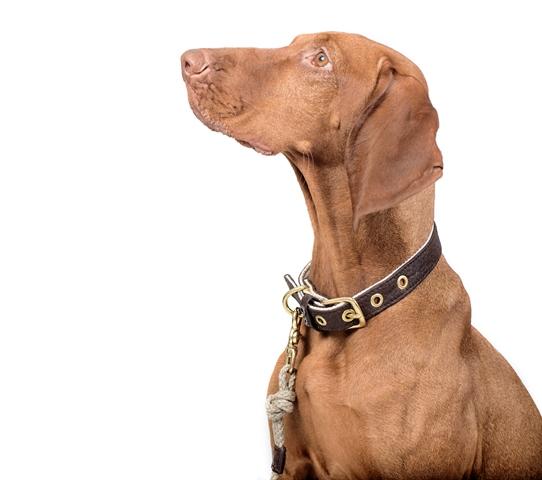 pinatex ovratnica funky dog