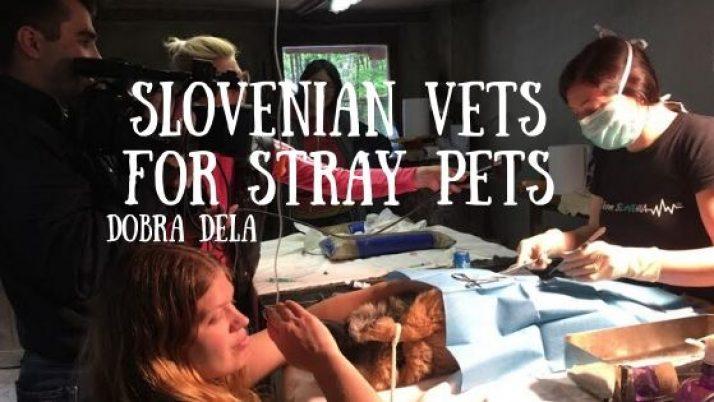 SVSP – Skupina Veterinarjev Sterilizira Potepuhe