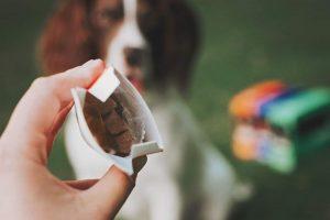analiza pasje hrane
