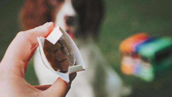 Zakaj je v briketih pepel in kaj vse ti lahko pove analiza pasje hrane